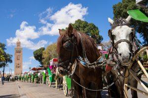 Caleche horses in Marrakech