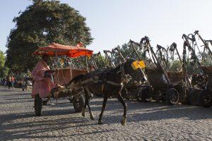 Cart horse in Ethiopia