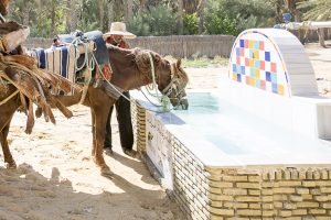 Horse drinking from water trough in Tunisia