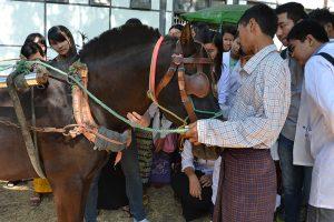 Veterinary training in Myanmar