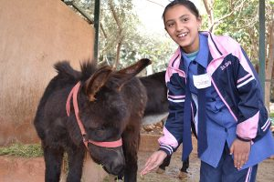 Donkey and schoolgirl in Jordan