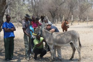 Veterinary training in Botswana